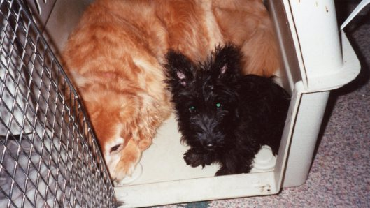 2001 Puppy Angus and Lady in Crate