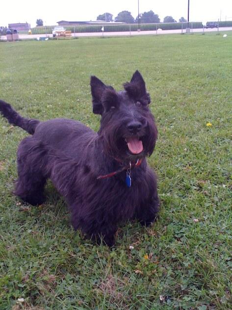 2009 August 27 Angus Dog Park (2)