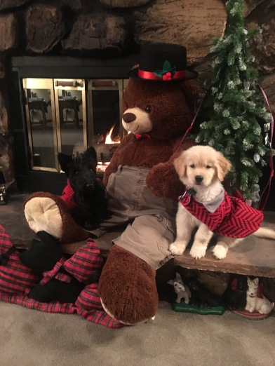 Cary Mr. Bear Ainsley Xmas 11-22-2015 7-22-26 PM