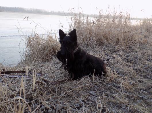 ainsley icy lake 2-6-2016 7-19-03 AM