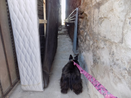 ainsley in alley 2-20-2016 12-46-08 PM