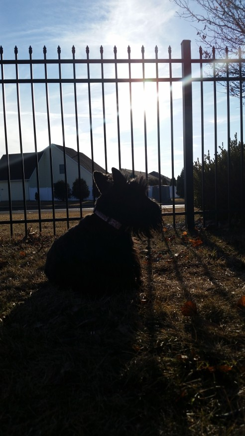 ainsley in fence with sun 3-14-2015 5-40-23 PM