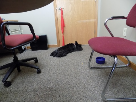 ainsley lying on floor at office 2-19-2016 12-23-43 PM