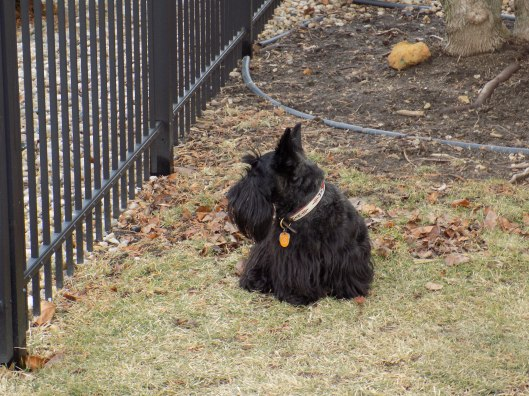 ainsley outside  1-31-2016 12-00-36 PM