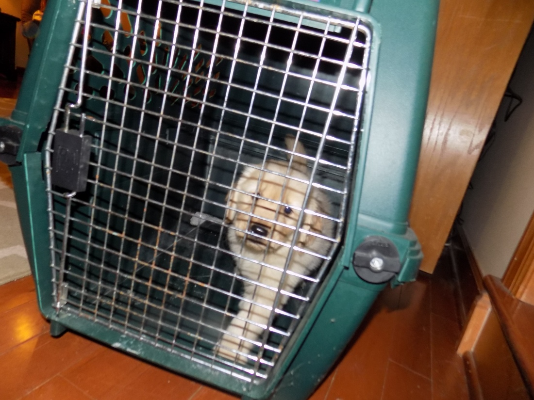 kerby in cage 3-2-2016 5-22-54 PM.JPG