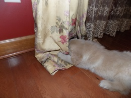 kerby pulling drapes 3-2-2016 5-13-13 PM