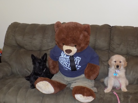 george and mr bear and ainsley 3-19-2016 11-28-27 AM